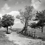 Rispescia, 1934