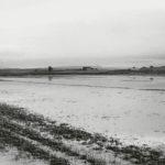 San Donato, 1934